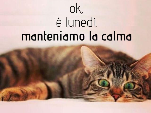 buon lunedì gatto