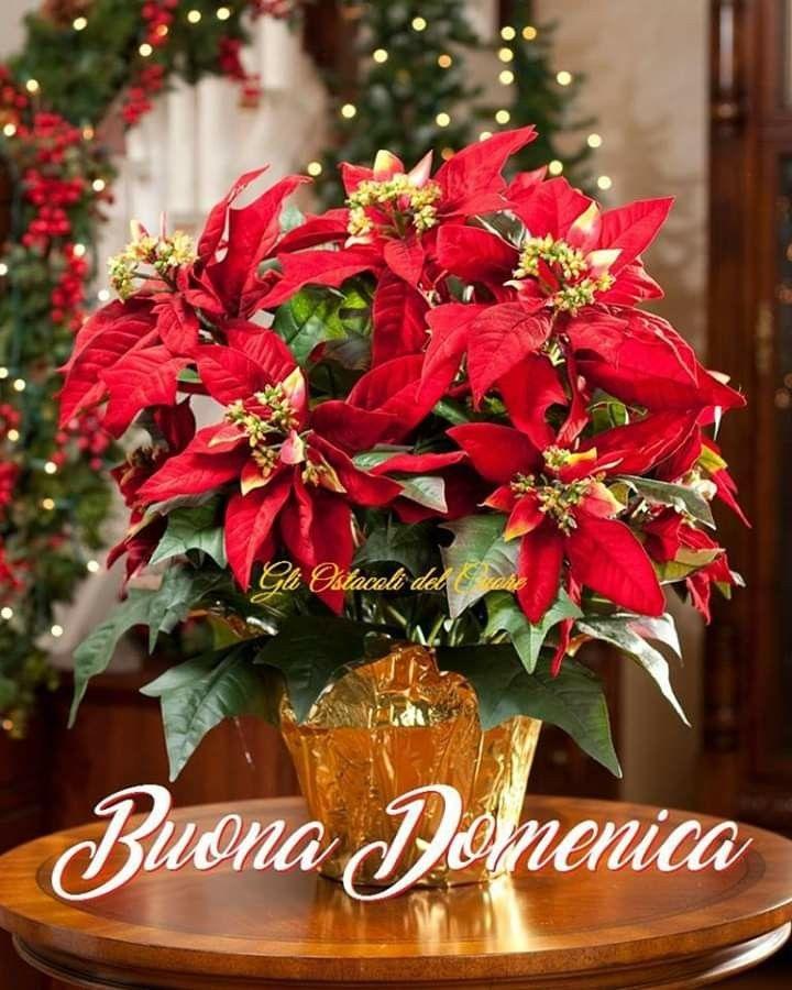 buona domenica natalizia