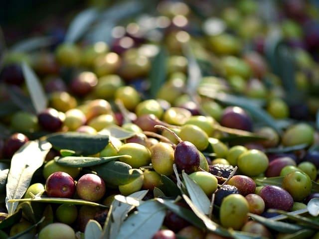 mangiare olive