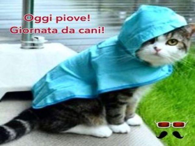 Buongiorno Piove 5