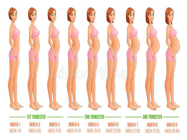 25 settimana di gravidanza pancia