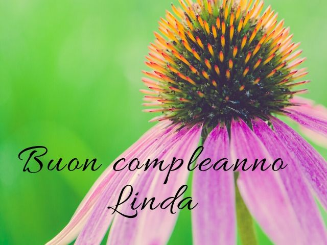 buon compleanno Linda