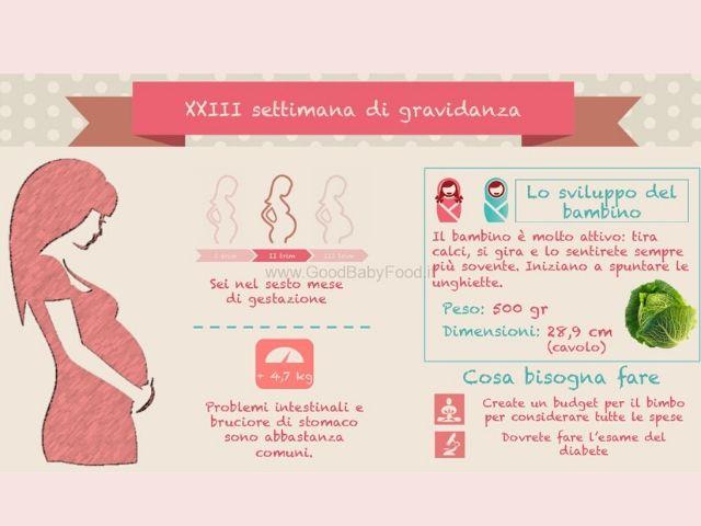 gravidanza 23 settimane