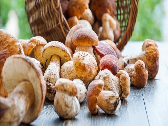 funghi bambini alimentazione