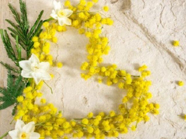 immagini mimosa festa donna