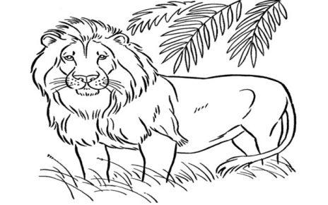 leone da colorare