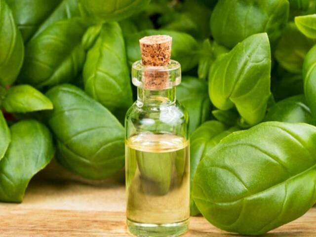 olio di basilico