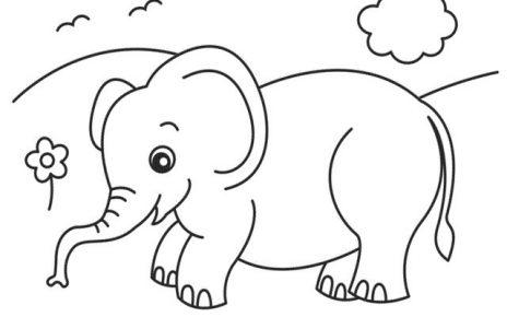 elefante da colorare