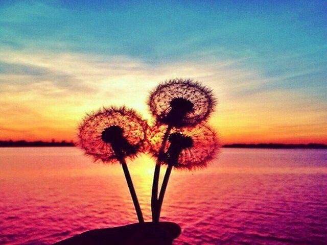 foto frasi sulla bellezza della vita