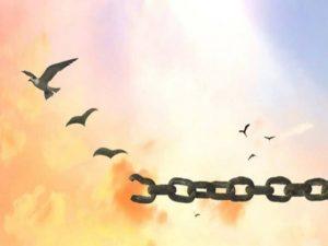 frasi con libertà