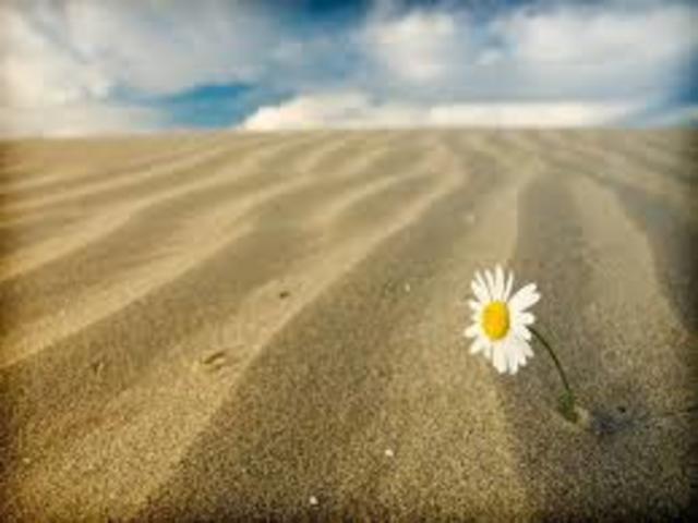 poesie-solitudine