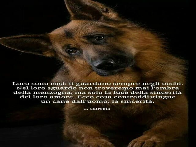 aforismi cani