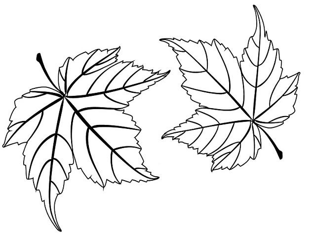 foglie da colorare