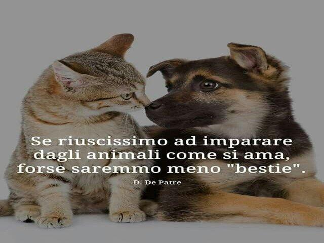 frasi bellissime sui cani