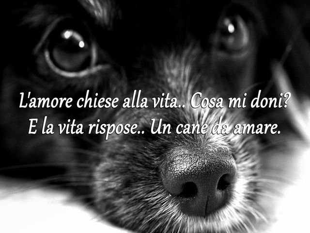 frasi commoventi sui cani
