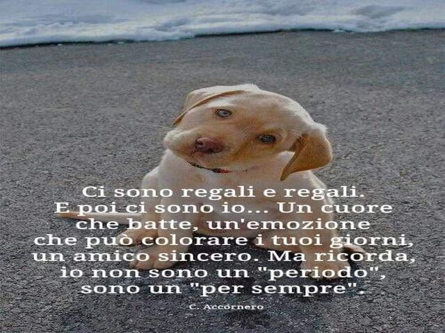 frasi d amore sui cani