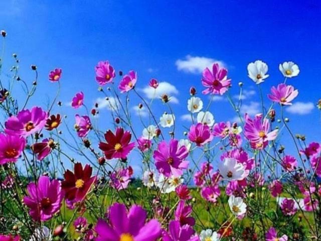 frasi e immagini sui fiori