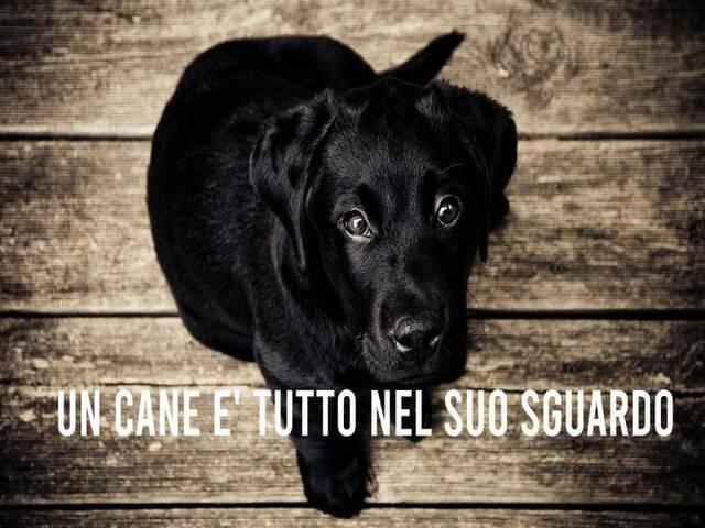 frasi famose sui cani