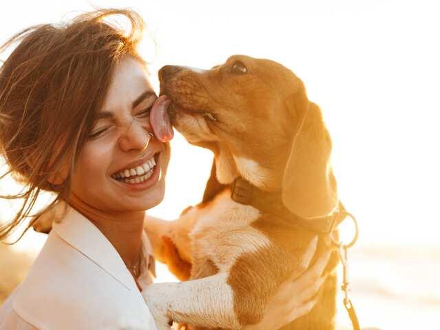 frasi film sui cani