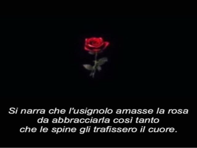 rasi immagini sulle rose