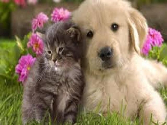 frasi sugli animali domestici