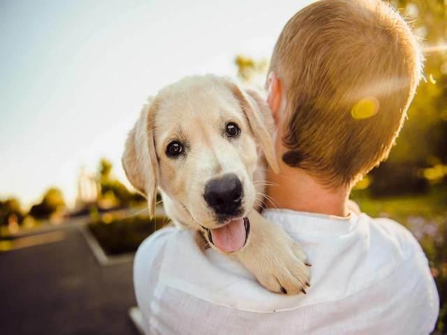 frasi sui bambini e cani