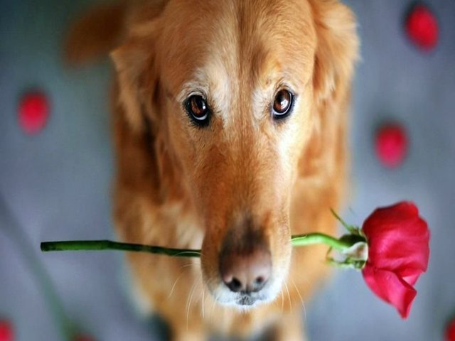 frasi sui cani dolci
