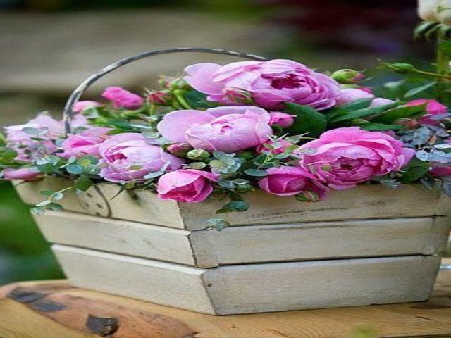 immagini rose bellissime