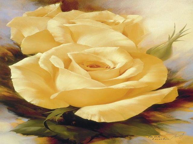 immagini di rose gialle