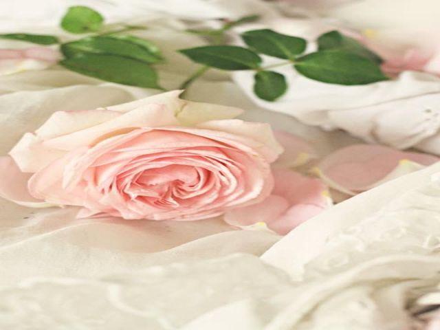 immagini di rose rosa