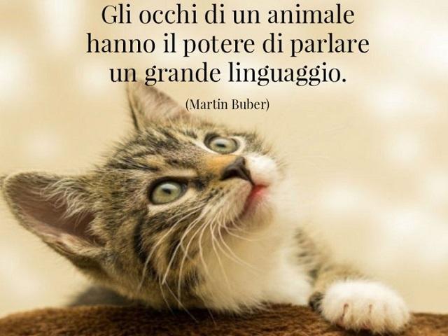 immagini e frasi sugli animali 11