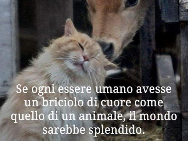 immagini e frasi sugli animali 13