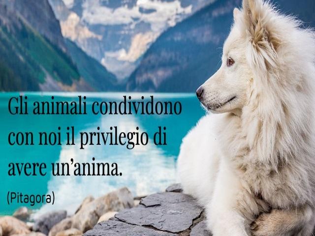 immagini e frasi sugli animali 2