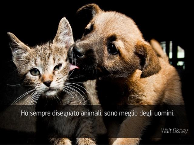immagini e frasi sugli animali 3