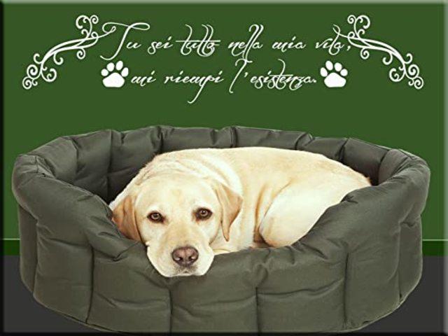 le più belle frasi sui cani