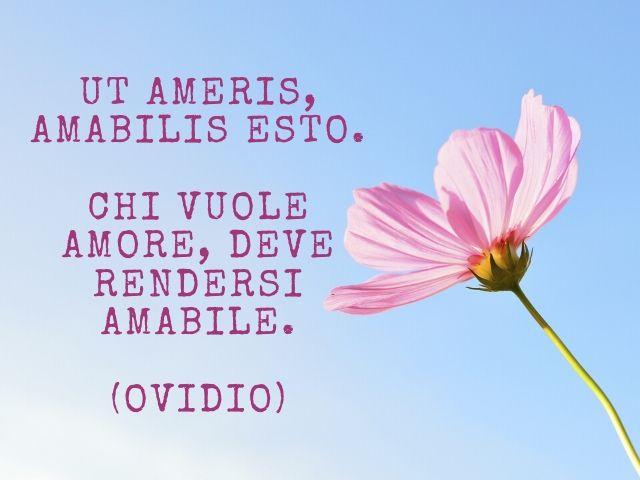 frasi amore in latino