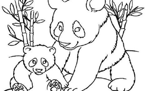 panda da colorare