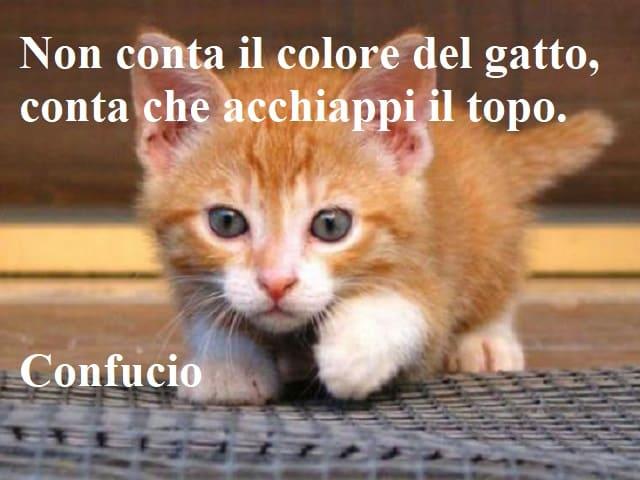 frasi belle sui gatti