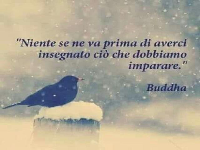 frasi buddha sull amore