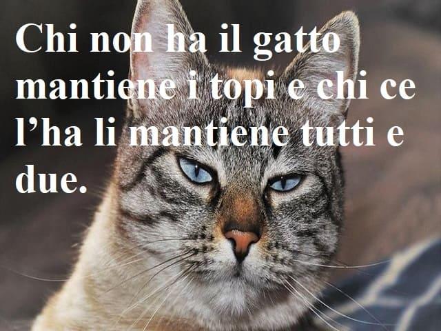 frasi celebri gatti
