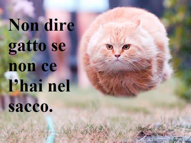 frasi dolci sui gatti
