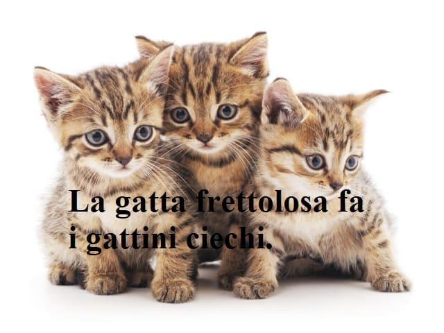 frasi e immagini sui gatti