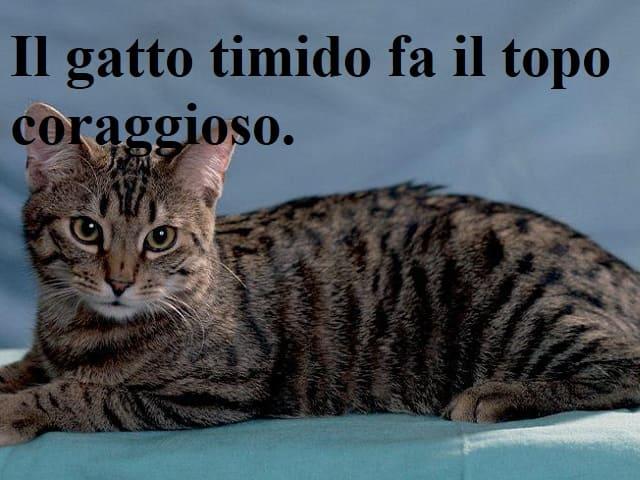 frasi famose sui gatti