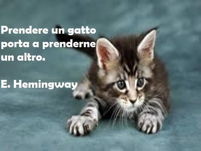 frasi gatti hemingway