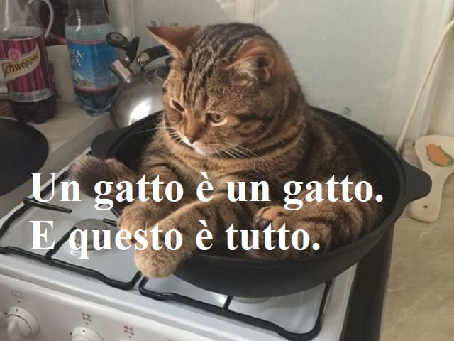 frasi per gatti
