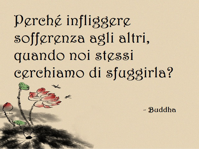 frasi su buddha