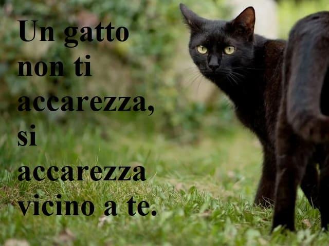 frasi sui gatti neri