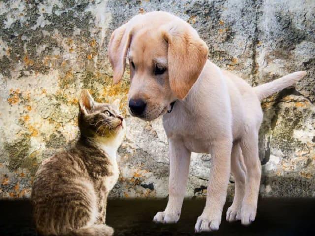 frasi su cani e gatti