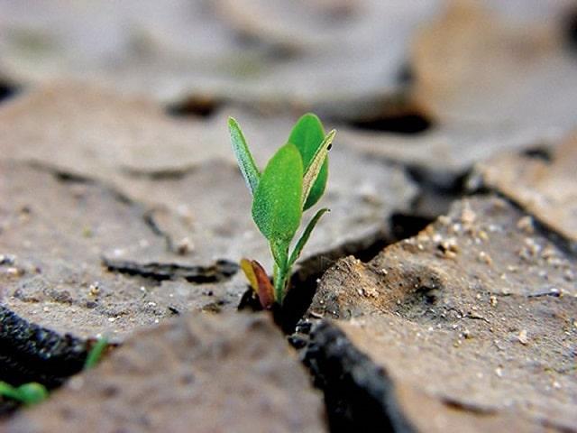 frasi sulla perseveranza