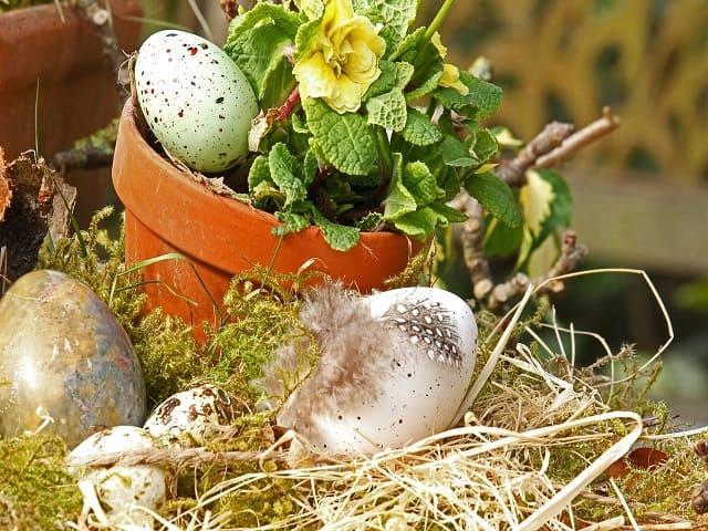 immagini di pasqua piante